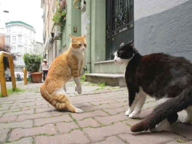 Kedi – Von Katzen und Menschen