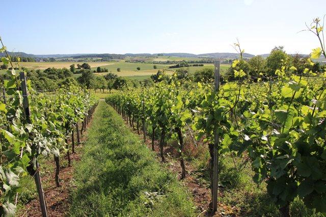 Weinlandschaft Hohenlohe