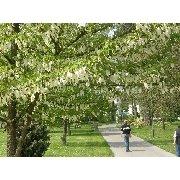 Arboretum im Schlosspark