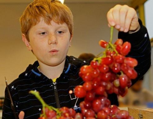 Junge mit Weintrauben.jpg