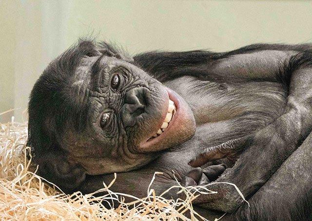 Wilhelma-Bonobo-Mary-Rose-Foto---Kristina-Wegener-web.jpg