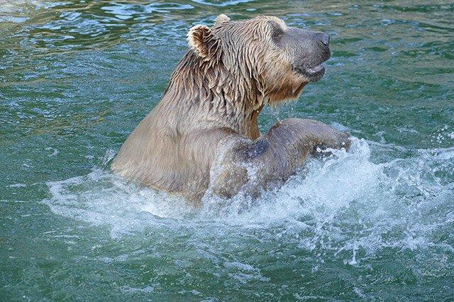 Zoo-HD-Eisbär-web.jpg