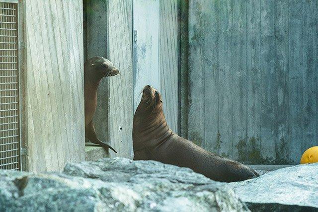 Seelöwen-web.jpg