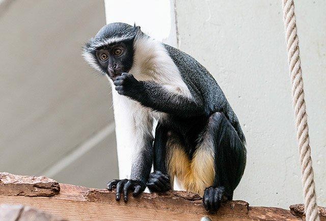 Meerkatze-Zoo-HD-web.jpg
