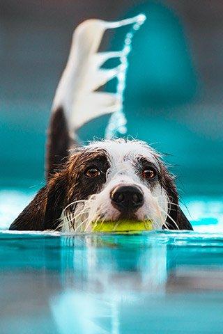 Hundeschwimmen---Foto-Samira-Schenk-web.jpg