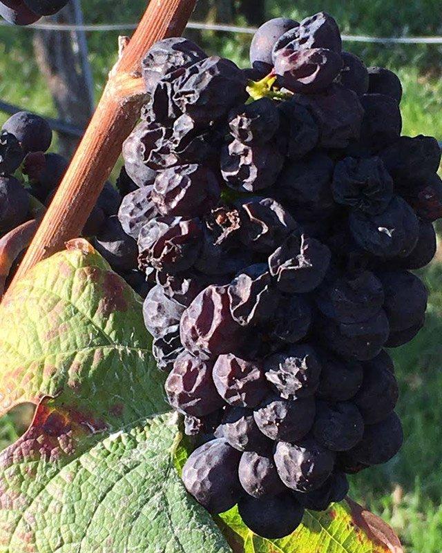 Lauffener Weingärtner Trockenbeeren