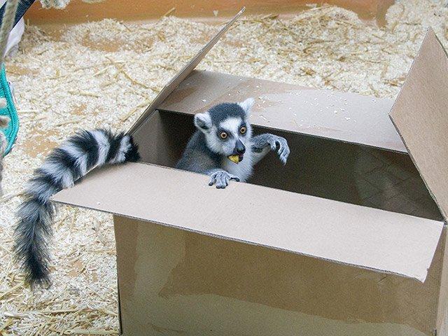 Zoo Heidelberg Katta Bato
