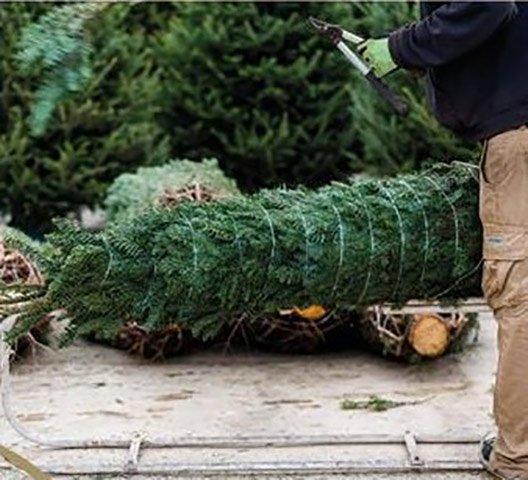 Esslinger Weingärtner Weihnachtsbaum