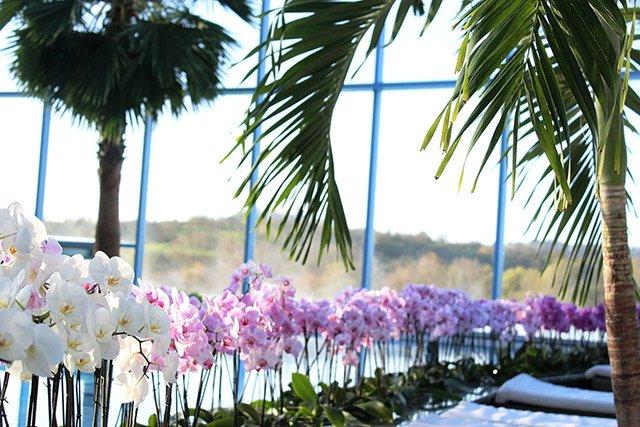 Orchideen Badewelt Sinsheim