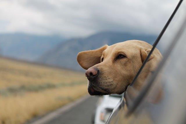 hund_auto.jpg