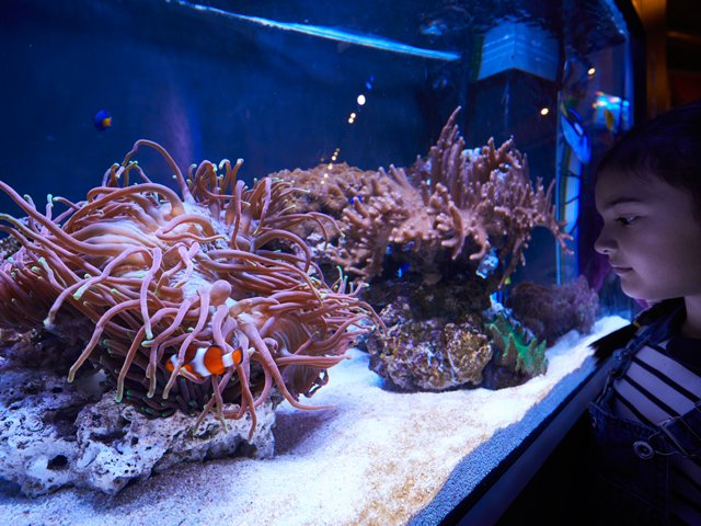 GREAT BARRIER REEF Aquarium