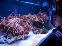 GREAT BARRIER REEF Aquarium