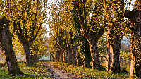 Botanische_Gärten.png