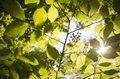 leaves-3089991_640.jpg