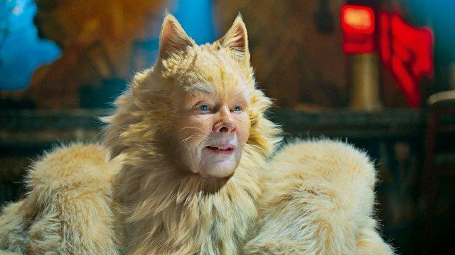 cats_2019_14_xp_szn.jpg