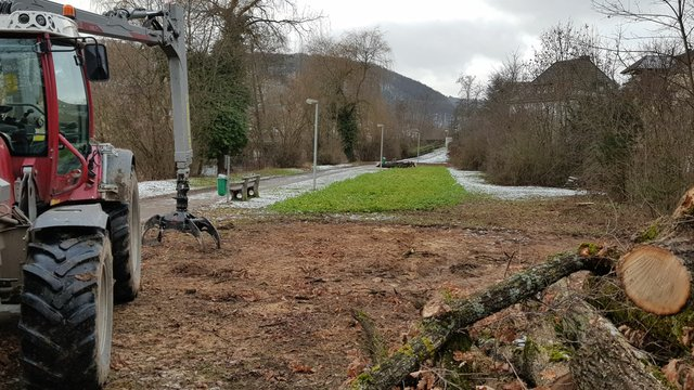 RegenüberlaufbeckenFäll_Rückschnittarbeiten13012021FotoSmStadtKÜN-(4).jpg