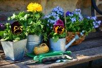 garden-2179530_1920.jpg