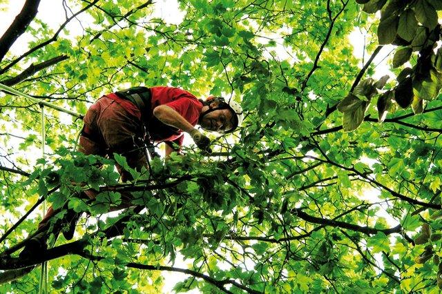 Vorsicht bei Artenschutz und Baumschnitt