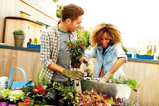Pflanzenpflege: genau die passenden Nährstoffe