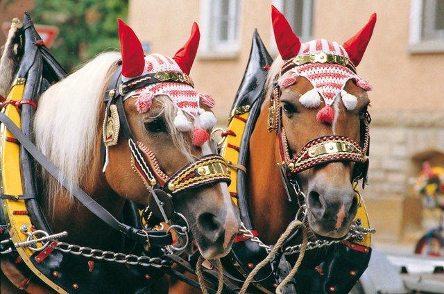 Ludwigsburger Pferdemarkt vom 15. bis 18. Mai