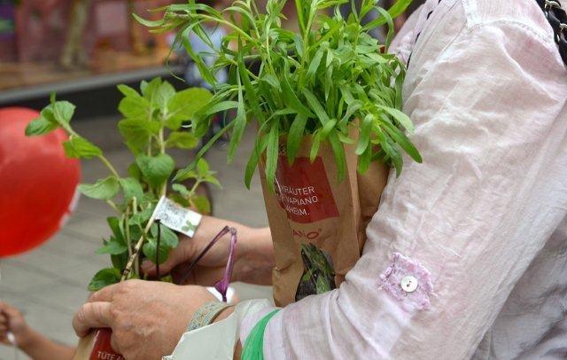 Vapiano und Urban Farming  1