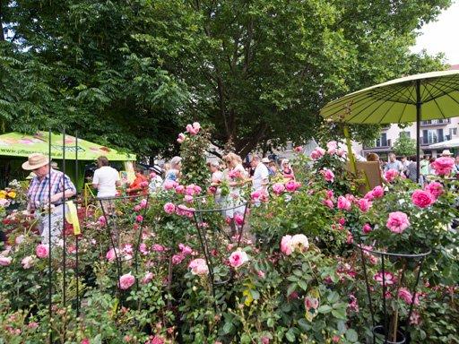 Heilbronner Rosenmarkt