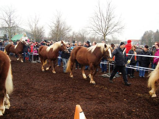 Öhringer Pferdemarkt